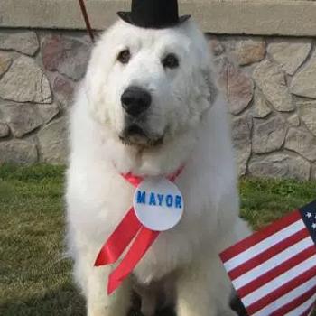duke-minnesota-mayor