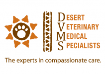 Image: Desert Veterinary Medical Specialists